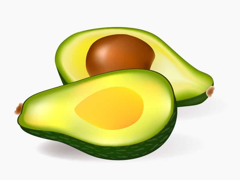 Avocado Wellensittich fressen