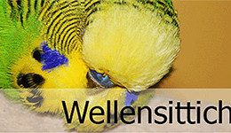 Wellensittichzucht-biller