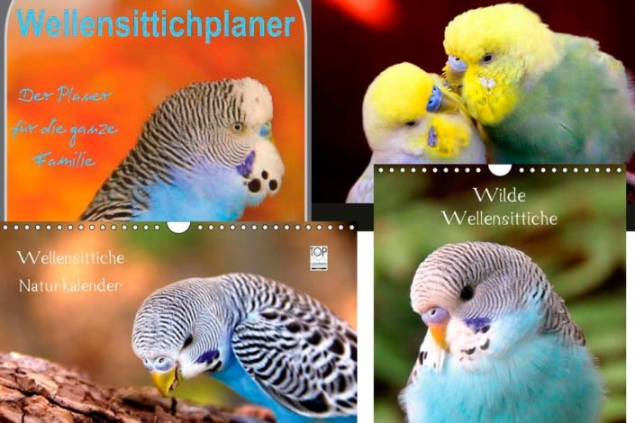 Wellensittichkalender 2016