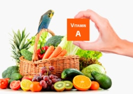 Vitamin A beim Wellensittich