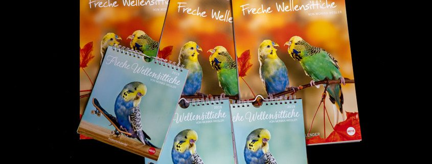 Wellensittichkalender 2019